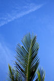 Skälla i den khotao asia ön vita Thailand och himmel Fotografering för Bildbyråer