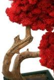 skälla trä för treen för den gammala planteren för leafleaves rött Fotografering för Bildbyråer