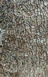 SkällCloseup av ett blomningpäronträd royaltyfri foto