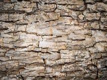 Skället av ett träd i brunt tonar med en karaktärsteckning Fotografering för Bildbyråer