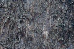 Skället av sörjer trädet. Arkivbild