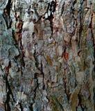 Skället av trädbjörken som en naturlig bakgrund royaltyfri foto