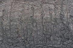 Skället av trädet är grått med en fin textur royaltyfri foto