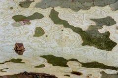 Skället av trädet är platan med härlig textur Arkivfoton