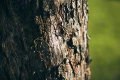 Skället av trädet på en grön bakgrund Trädet på bakgrunden av gräs N?rbild f?r tr?dsk?ll fotografering för bildbyråer