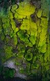 Skällgräsplan royaltyfri fotografi