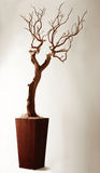 skällleafen låter vara gammalt plantertreeträ Arkivbilder