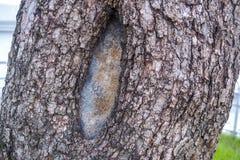 Skälltexturbakgrund arkivfoto