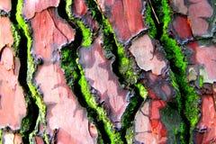 Skällträd i färger Arkivfoto