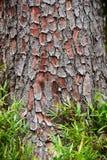 Skällträd och texturbakgrund för grönt gräs Arkivbilder