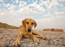 Skämtsam hund på stranden Royaltyfri Fotografi