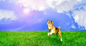 Skämtsam hundbanhoppning Arkivfoto