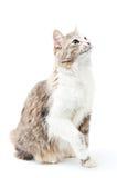 skämtsam katt Arkivbild