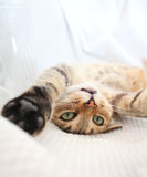 skämtsam katt Royaltyfria Bilder