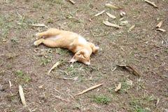 Skämtsam katt som ligger och att vända med textsidan upp på trädgården, asia katt arkivfoto
