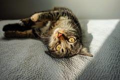 Skämtsam katt som tycker om solen i sängen på Porto, Portugal royaltyfri foto