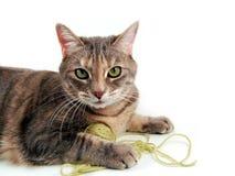 skämtsam kattunge Arkivfoton
