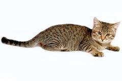 Skämtsam kattunge. Arkivbild
