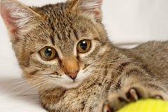 Skämtsam kattunge. Arkivfoto