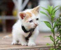 skämtsam kattunge Royaltyfri Bild