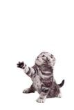 skämtsam kattunge Royaltyfri Fotografi