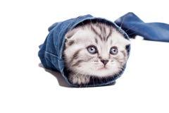 skämtsam kattunge Arkivbilder