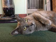 skämtsam kattunge Arkivfoto