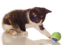 skämtsam kattunge Royaltyfria Foton