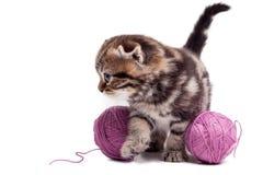 Skämtsam och nyfiken kattunge Arkivbilder