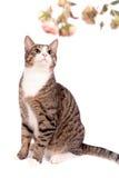 Skämtsam strimmig kattkatt på vit Fotografering för Bildbyråer