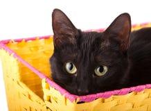 Skämtsam svart katt som kikar över kanten av en gul korg royaltyfri fotografi