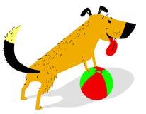 Skämtsam tecknad filmhund med bollen Det gladlynta husdjuret inviterar för att spela leksaken Royaltyfri Foto