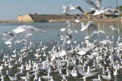 Skämtsamma fåglar som försöker att gripa fallen för mat dem arkivfoton