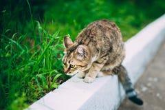 Skämtsamma gulliga roliga Cat Kitten Play Outdoor Sommar Arkivbild