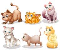 Skämtsamma katter Arkivfoto