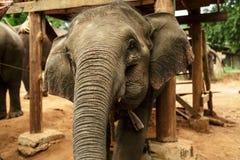 Skämtsamt behandla som ett barn elefanten Arkivbilder