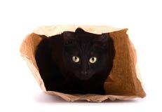 Skämtsamt nederlag för svart katt i en brun pappers- påse arkivbilder