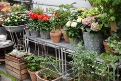 Skärm av blommor och växter som är till salu på blomsterhandlaren, shoppar royaltyfri fotografi