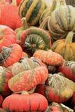 Skärm av färgrik turks turbansquash Arkivfoton