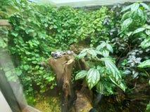 Skärm av grodan bak exponeringsglas i grön planet - inomhus tropiskt regn Forest Tourist Attraction, stad går, Dubai royaltyfri fotografi