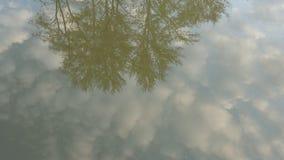 Skärm av kronor av träd i vatten mot bakgrunden av en klar himmel Arkivfoto