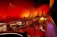 Skärm för fossil för Lee Kong Chian Natural History museumdinosaurie arkivbild