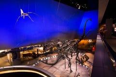 Skärm för fossil för Lee Kong Chian Natural History museumdinosaurie royaltyfri foto