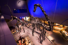 Skärm för Lee Kong Chian Natural History museumdinosaurie royaltyfri foto