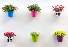 SkärmJardiniere och blomma på väggen Royaltyfri Bild