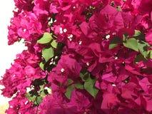 Skåda skönheten av vårblomningar! Royaltyfri Bild