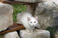 Skåpbil katt Royaltyfria Bilder