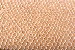 skórę krokodyla konsystencja Obraz Royalty Free