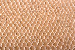 skórę krokodyla konsystencja Fotografia Stock