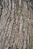 Skóra drzewo obraz royalty free